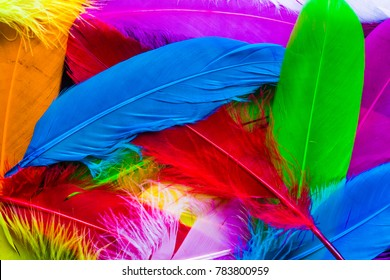 Colourful bird feathers background