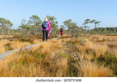 Colourful bog landscape in the autumn. People hiking along the boardwalk.  Kakerdaja bog, Estonia.