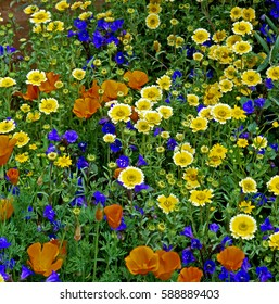 Colourful Border of mixed meadow flowers