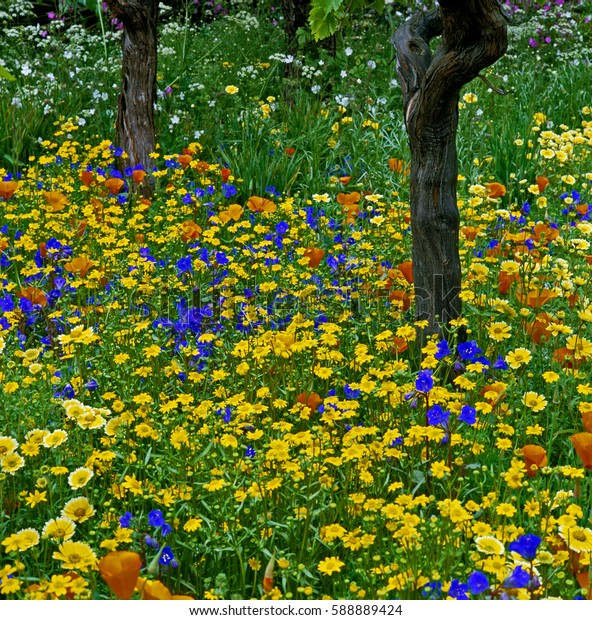 Colourful Border with wild meadow flowers