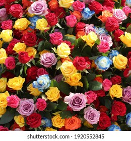 Colourful bouquet of roses, floral background.