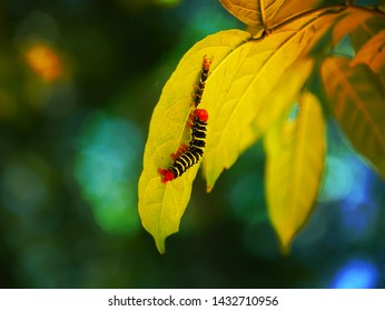 Colourful caterpillars on leaf, close
