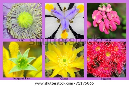 Colourful Collage Flowers Their Names Stock Photo Edit Now