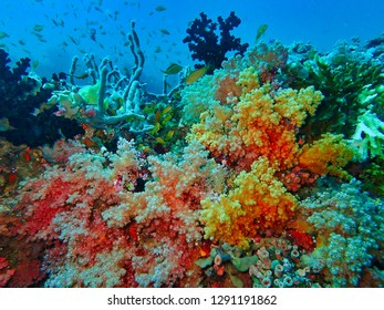 Colourful coral garden filled with red and yellow soft corals and tiny antheas, Maldives.