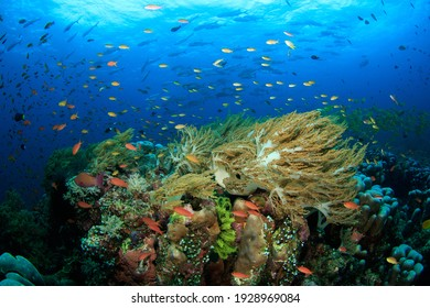 Colourful coral reef scene with little fish. Underwater image taken on scuba diving trip in Indonesia.