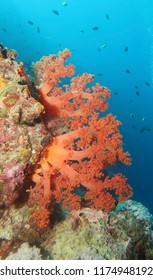 Colourful Corals  in Moalboal