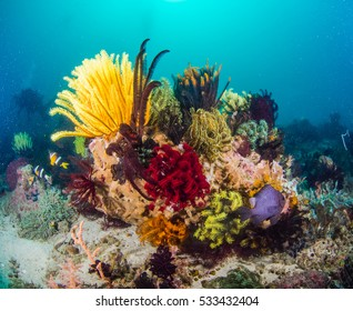 Colourful corals in the Philippines
