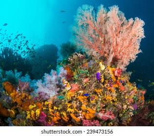 Colourful Corals in Raja Ampat