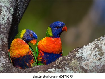 Colourful couple. On a tree two bright and colourful parrots, it is close and on a bright background.
