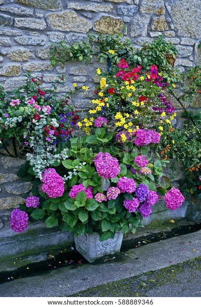 Colourful display of Containers and Wall Baskets in a cottage garden