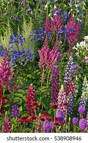 A colourful display of flowering border plants