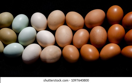 Colourful eggs in brown to green gradient natural tones still image. Full frame opaque cover background