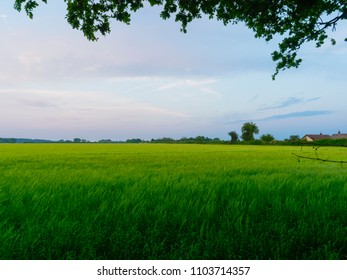 The colourful evening sky darkens over a field of young, green, wheat plants.