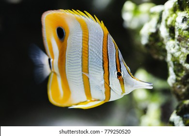Colourful exotic fish