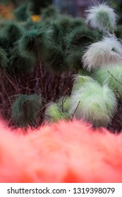 Colourful feathers to decorate birch twigs with for Easter celebration in Sweden.