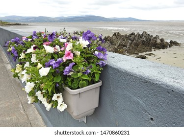 Colourful flower basket on beach wall in Blackrock, Dundalk, County Louth overlooking Dundalk Bay, the Cooley Peninsula and the Cooley Mountains