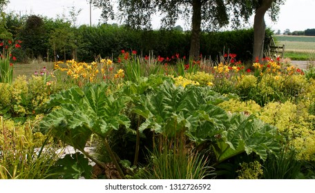 Colourful flower border of a cottage garden with daylilies, gunnera, crocosmia and echinacea