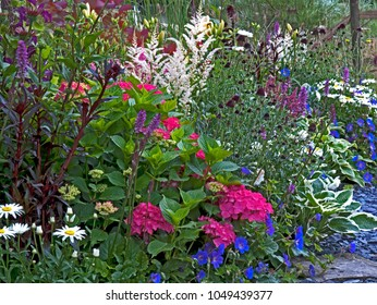 A colourful flower border with Hydranger, Astilbie, Hosta and other mixed planting of flowers