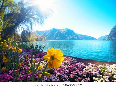 Colourful flowering on the lake  against the background of green mountain, an attractive view of Lake Como in Lugano, İtaly.