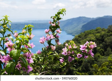 Colourful flowers pictured in front of Apoyo Lagoon in Nicaragua.