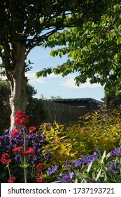 Colourful flowers and plants in a garden with overhanging trees in springtime