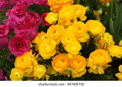 Colourful flowers, Toowoomba, Brisbane
