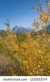 Colourful Foliage in Autumn/Fall in the Rocky mountains around Banff, Alberta, Canada
