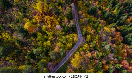 colourful forest and road
