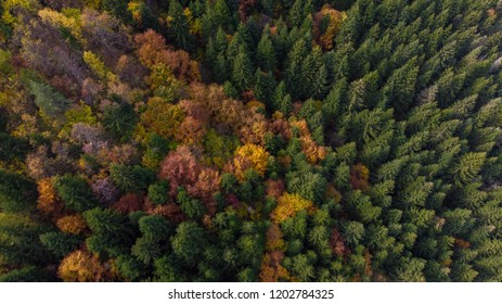 colourful forest and trees from air