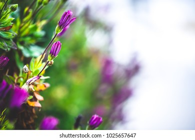 Colourful garden flowers. Nature spring