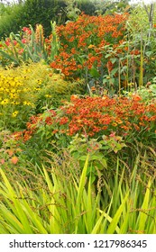 A colourful 'Garden Room' with flowering heleniums; coreopsis; rudbeckia; grasses;