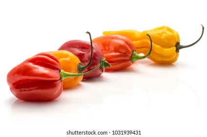 Colourful Habanero chili collection isolated on white background five hot peppers yellow red orange in row