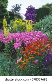 Colourful herbaceous border in a Cottage garden