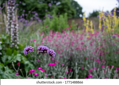 Colourful herbaceous border in the historic walled garden at Eastcote House Gardens, in the Borough of Hillingdon, London, UK