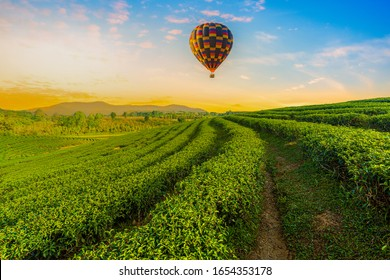 Colourful hot-air balloons flying over tea plantation landscape at sunset,Asia, Tea Crop, Plantation, Farm, Travel