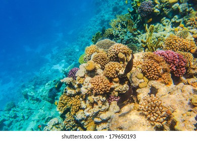 Colourful kind of a landscape under water