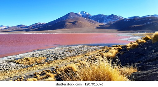 """The colourful Laguna Colorada or """"Red Lagoon"""" at 4,278 m, gets its red colour by a special algae, which is caused by the high mineral content of the water. Salar de Uyuni, Bolivia"""