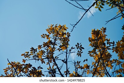 Colourful leaves of a tree with blue sky background photo
