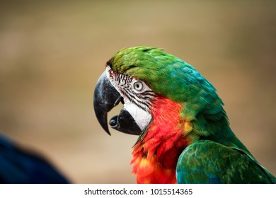 A colourful macaw parrots stand on log.