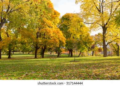 Colourful Maple Trees in Canada in the Fall. Leaves can be seen on the ground and on trees. There is space for text