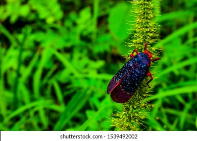 colourful Moth in a green background can be used as wallpaper