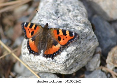 Colourful Orange Butterfly Settling on a Stone