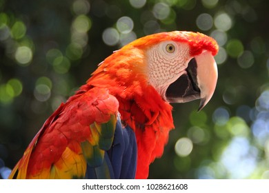 colourful parrot with green blurry background