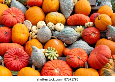 Colourful Pumpkin Collection At The Autumn Market