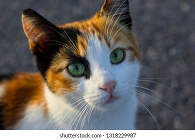 colourful pussycat with beautiful eyes