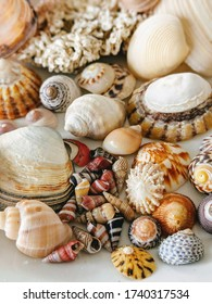 Colourful seashells of Flinders Island