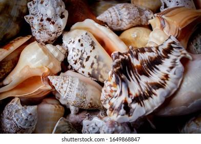 a colourful of selection of souvenir sea shells