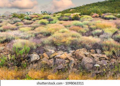 colourful shrubs among a rocky rough landscape of uncultivated land in Andalucia, Southern Spain