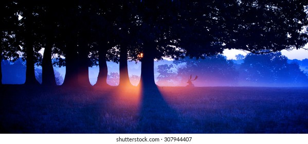 Colourful silhouette of a fallow deer in the mist