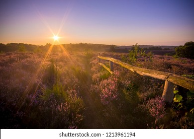 Colourful sunrise heather landscape with sun rays shining over a purple heather field at the National Park Hoge Veluwe, Netherlands, No people, peaceful serene view over purple heather field